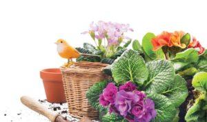 Gardening-864x510